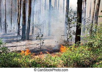 火, 森林