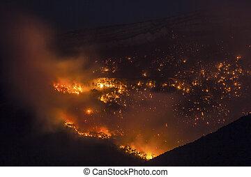 火, 森林, 燃焼, 夜