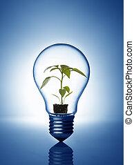 灯泡植物, 内部
