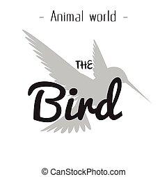 灰色的背景, 圖像, 矢量, 動物, 世界, 鳥, 蜂鳥