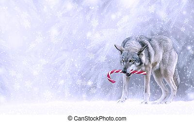 灰色, カード, クリスマス, 雪が多い, lupus), すばらしい, lollipop, たくわえ, 歯, 雪, キャンデー, 新しい, 狼, ファンタジー, 背景, 年, 杖, forest., 面白い, にっこり笑う, 肖像画, snowfall., 冬, (canis