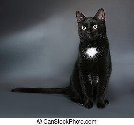 灰色, スポット, ねこ, 黒, 白, 座る