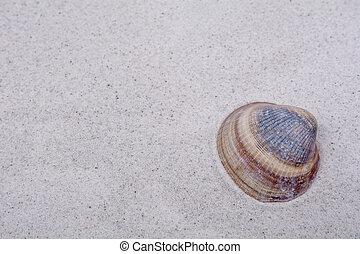 灰色, 沙子, 殼, 背景