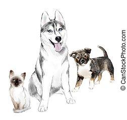 灰色, 犬, 家, 子ネコ, タイ人, siberian, pooch, 成人, friends., ハスキー, 白, 子犬, pets.