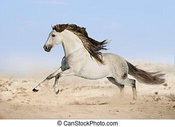 灰色, 砂漠, 馬, andalusian