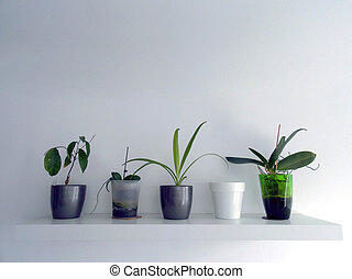 灰色, 花, 単純である, ポット, shelf., 装飾, 内部, 緑, 白