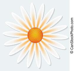 灰色, 花, 背景, camomile