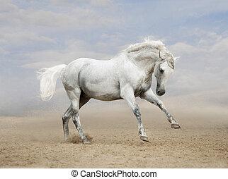 灰色, andalusian, 馬, 砂漠