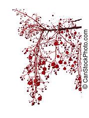 炎, illawarra, 花, 木