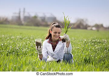 点検, agronomist, 成長, ムギ 分野, 女