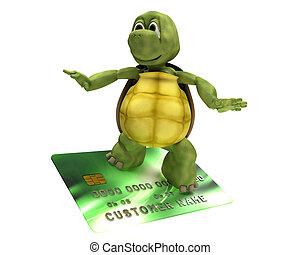烏龜, 由于, a, 信用卡