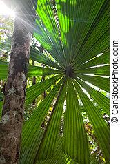 热带, 质朴, 雨林, 背景