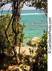 热带, caribbean海滩, 森林
