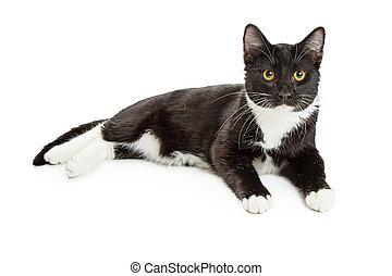 無尾禮服, 貓, 躺下, 在上方, 白色