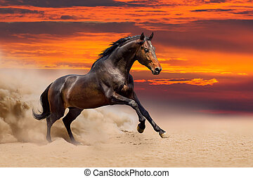 無料で, 馬, 湾, 動くこと, 美しい