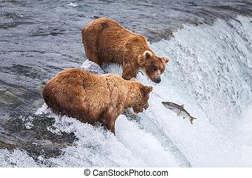 熊, アラスカ