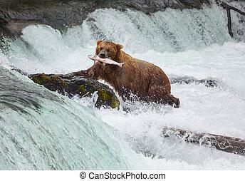 熊, 上に, アラスカ