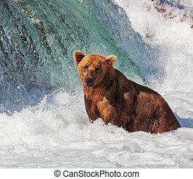 熊, 上, 阿拉斯加