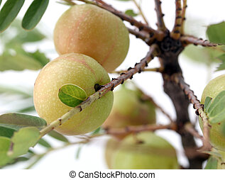 熟した, 新たに, indian, gooseberry(amla, ∥あるいは∥, aamla), 上に, a, 木,...