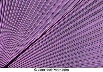 熱帯のリーフ, palm., 抽象的, 自然のパターン, 手ざわり, エキゾチック, 幾何学的, すみれ, 背景