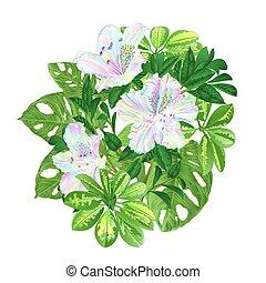 熱帯の花, 多彩, ツツジ, そして, monstera, vector.eps