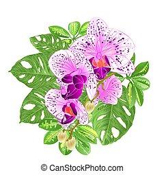 熱帯の花, 蘭, phalaenopsis, そして, monstera, vector.eps