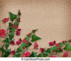 熱帯の花, bougainvillea