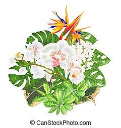 熱帯の花, strelitzia, そして, 白, 蘭, phalaenopsis, vector.eps