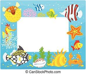 熱帯の魚, フレーム