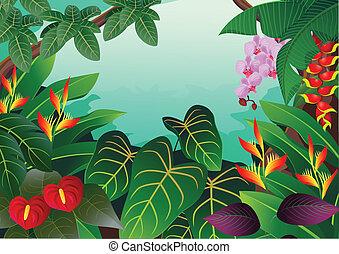 熱帯 森林