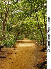 熱帯 森林, 17