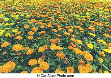 熱帯 植物, 花, カラフルである