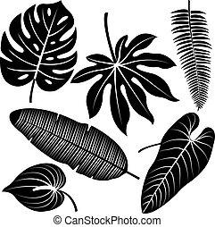 熱帯 植物, 葉, ベクトル, シルエット, collection.