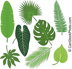 熱帯 植物, 葉, ベクトル, セット