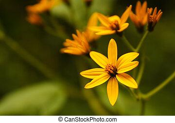 熱帯 花, コロンビア
