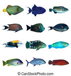 熱帯 魚, コレクション
