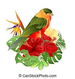 熱帯 鳥, そして, 赤, ハイビスカス, そして, strelitzia reginae, vector.eps