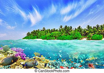 熱帶的島, 以及, the, 水下, 世界, 在, the, maldives., thoddoo, island.