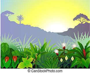 熱帶的森林