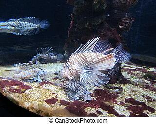 熱帶魚, 在, an, 水族館