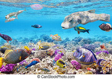 熱帶, 水下, 珊瑚, 世界,  fish