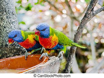 熱帶, 鳥