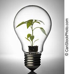 燈泡植物, 裡面