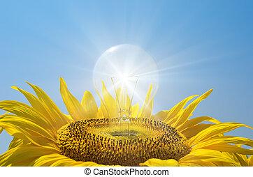 燈泡, 反映, 向日葵