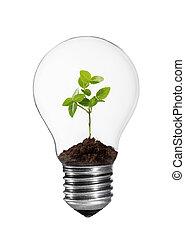 燈泡, 由于, 植物