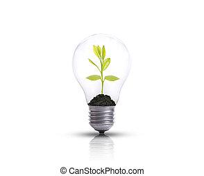 燈泡, 針對, 樹, 被隔离, 在懷特上, 背景。, 生態, 以及, 能量, 概念