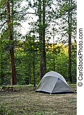 營地, 在, kaibab, 森林, 荒野, 亞利桑那