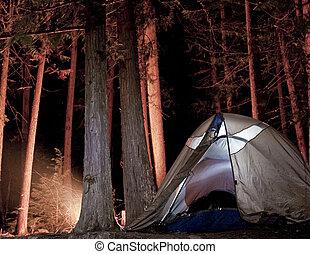 營地, 在, the, 樹林, 夜間
