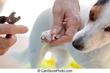 爪, 切断, ねじれて切れる, 犬