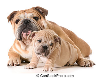 父, 犬, 息子